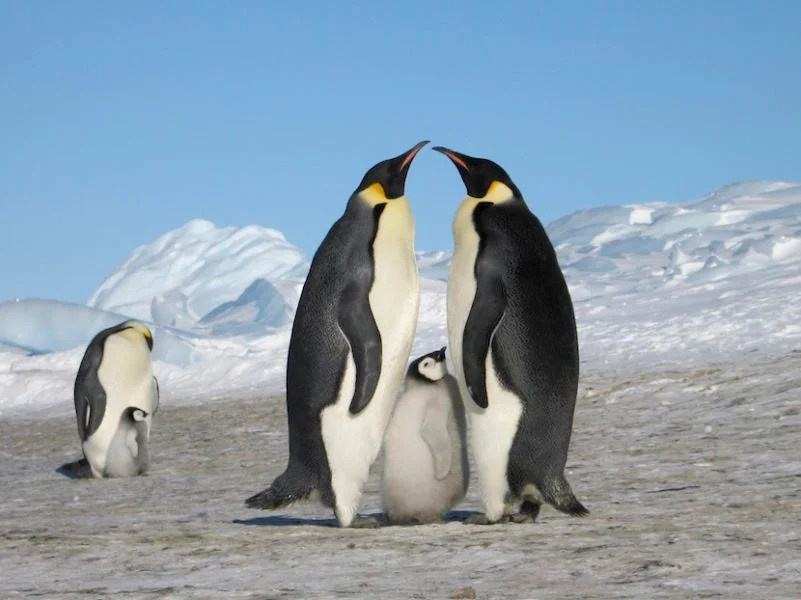 For $74,000 You Can Spend the Night with Emperor Penguins