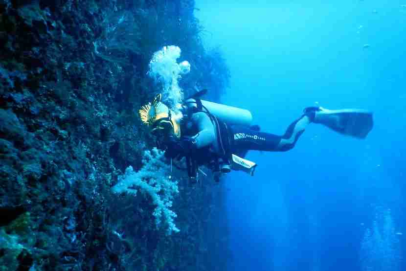 You may not notice it while exploring the oddities of the ocean, but SCUBA diving is a pretty good workout.