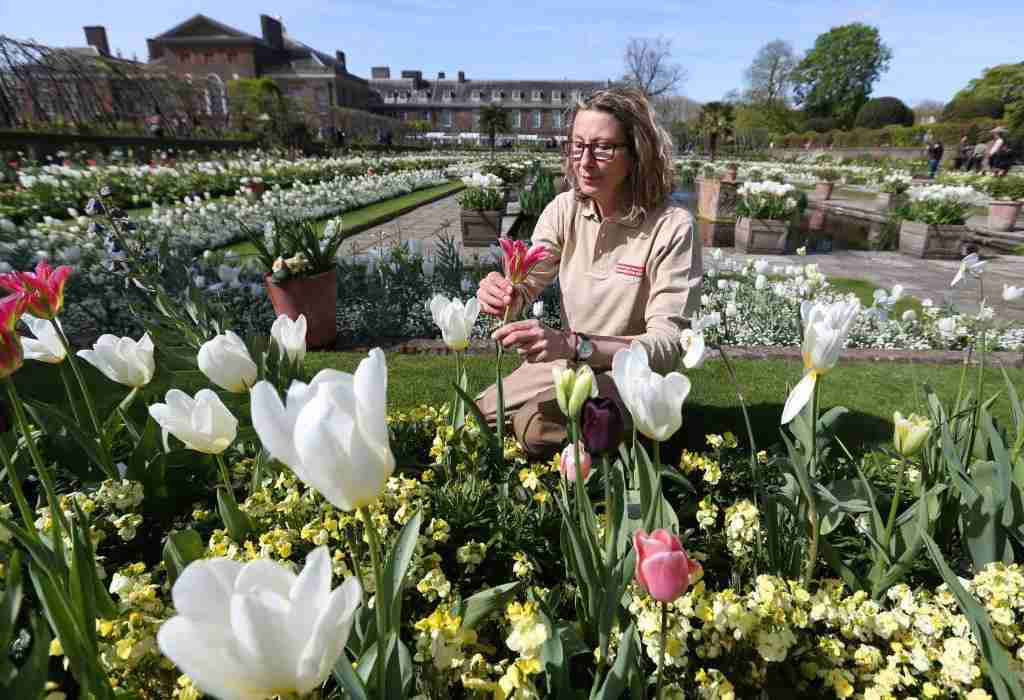 To create The White Garden, 12,000 bulbs were planted. Image courtesy of Jonathan Brady/PA Images via Getty Images.