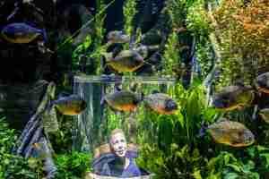 Piranha pop up bubble