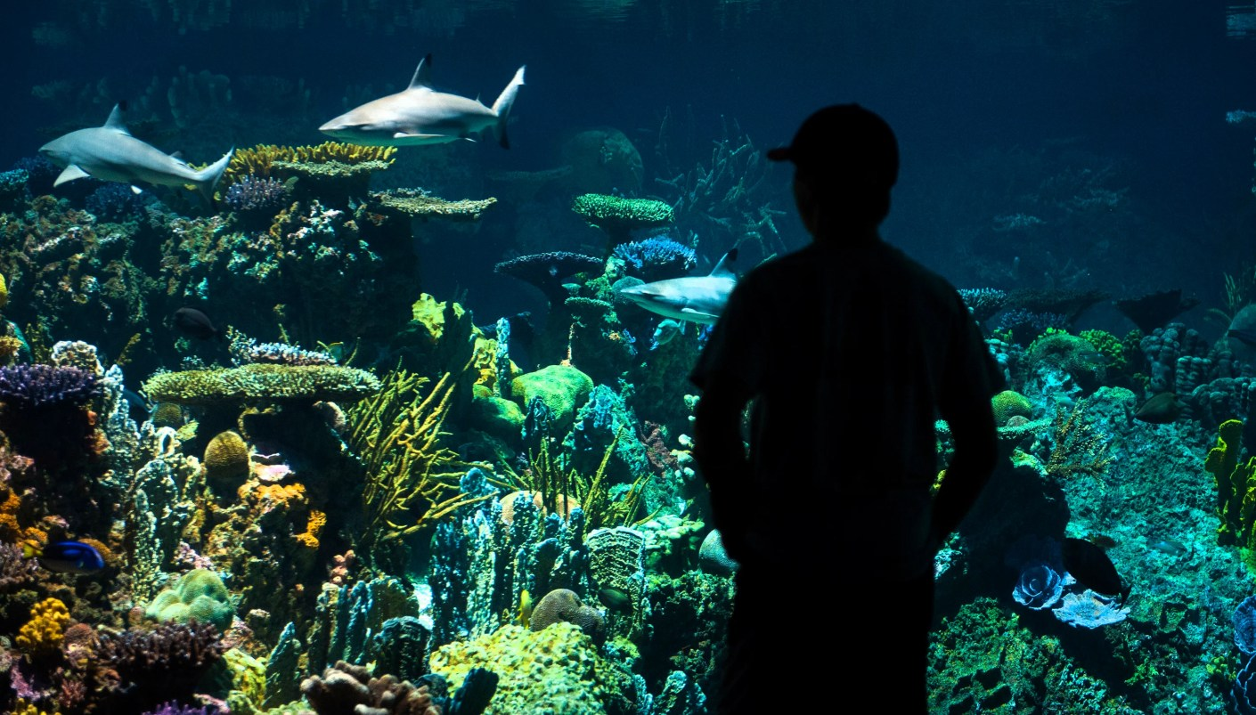 The Blacktip Shark Reef exhibit at the Baltimore Aquarium. Image by Katherine Frey/The Washington Post via Getty Images