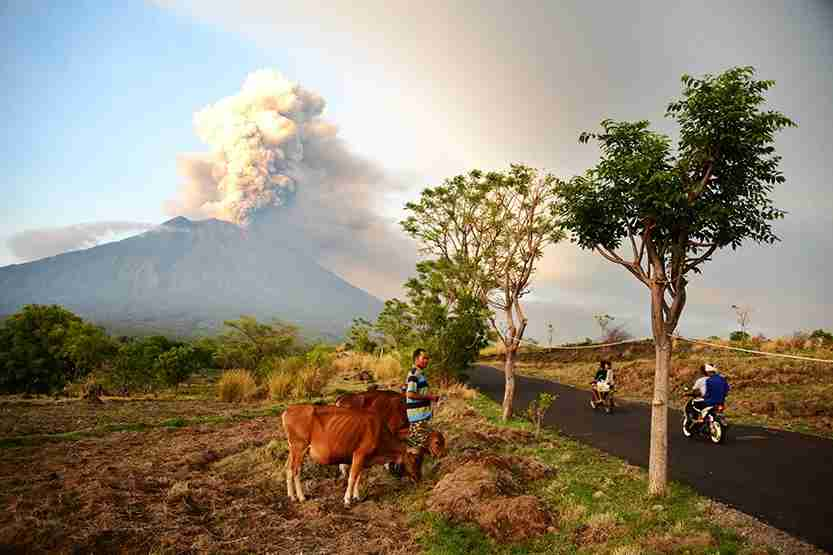 A farmer moves his cattle as Mount Agung erupts seen from Kubu sub-district in Karangasem Regency. Photo by SONNY TUMBELAKA/AFP/Getty Images