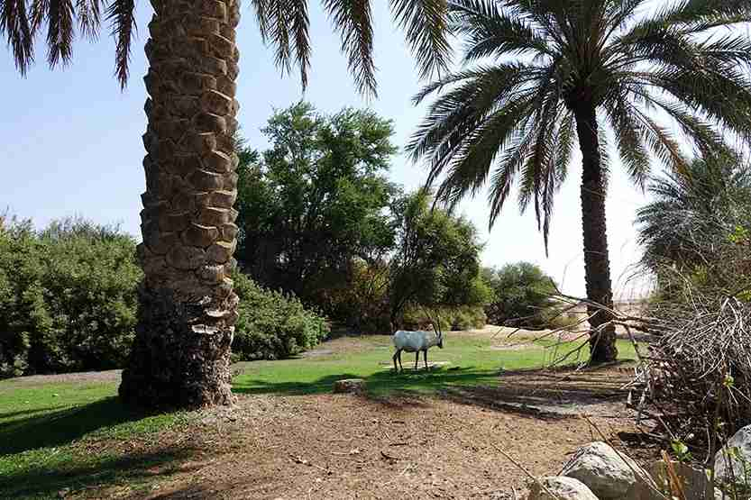 Grounds Al Maha Desert Resort Dubai Review