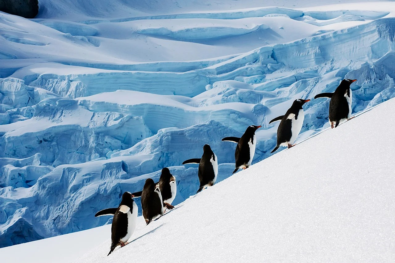 Staying a month in an all-inclusive resort, a new way to reach Antarctica and more