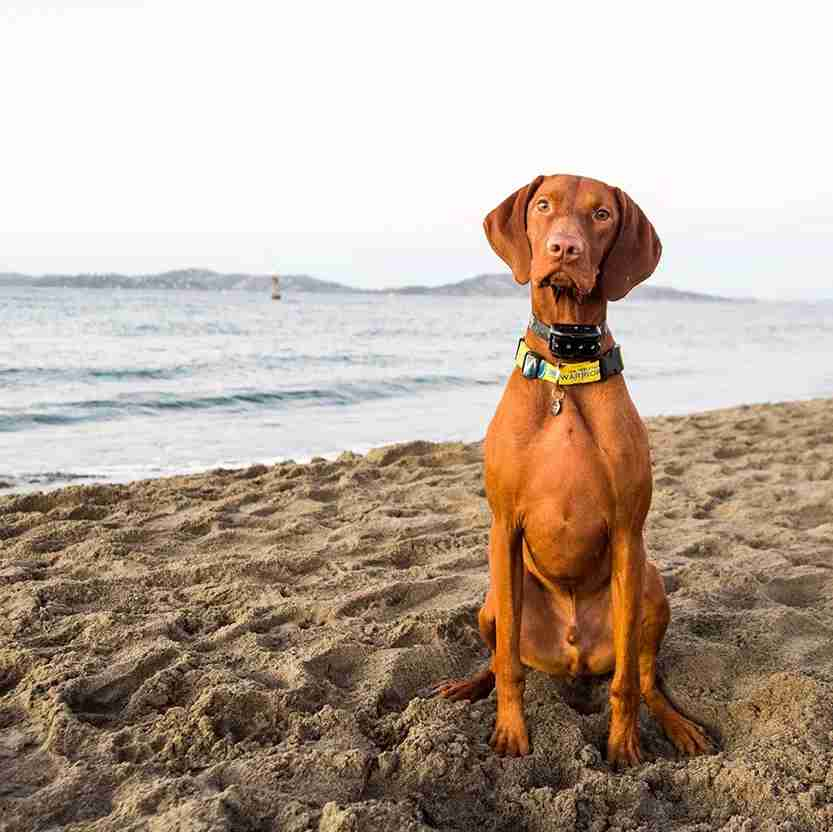 "Tex, Vizsla (2 y/o), Crissy Field Beach, San Francisco, CA • ""I think he's the fastest dog on the beach."" Photo courtesy The Dogist"