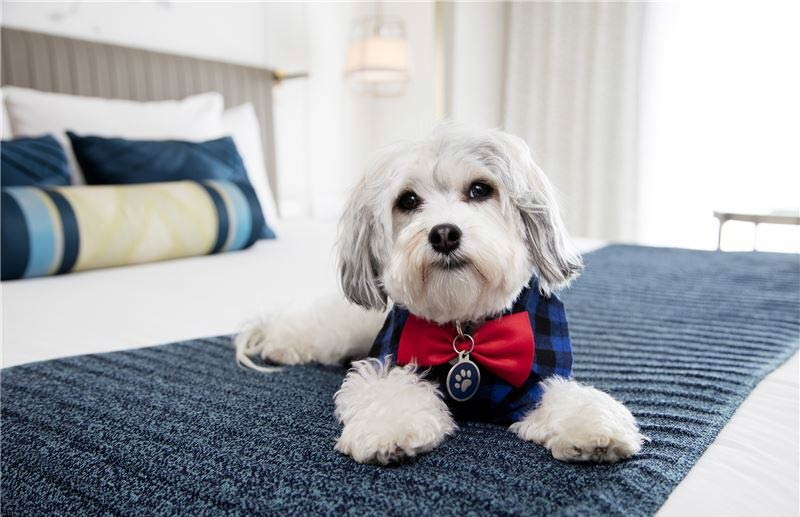 Dog-Friendly San Francisco Hotel Offers Puppy Love to Guests
