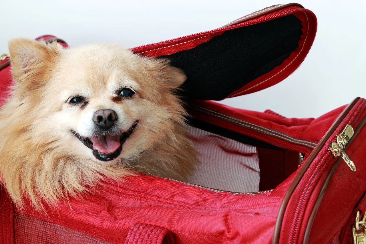 United Officially Tightens Its Pet Travel Policies
