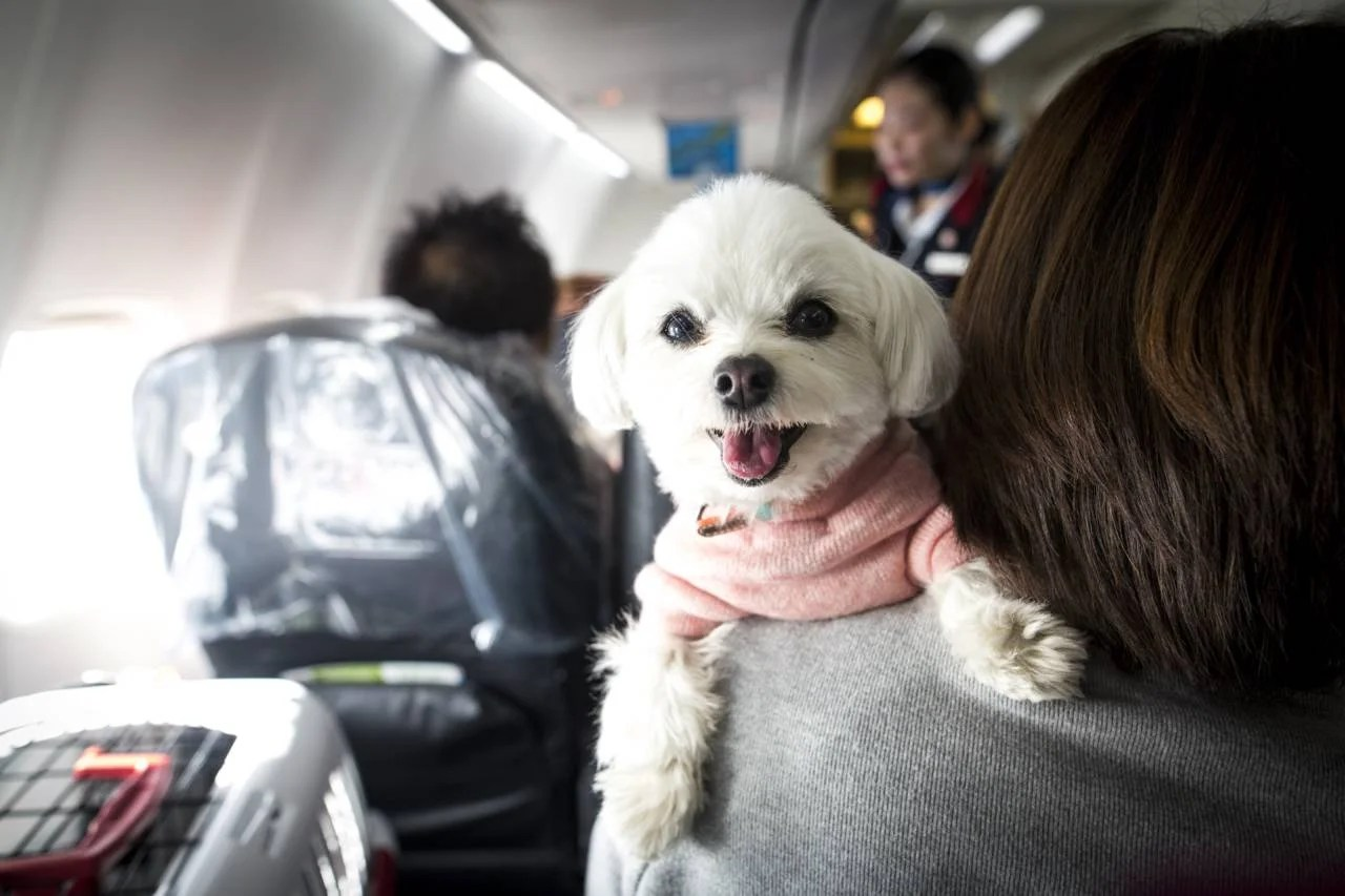 8 things to consider before flying with your pet