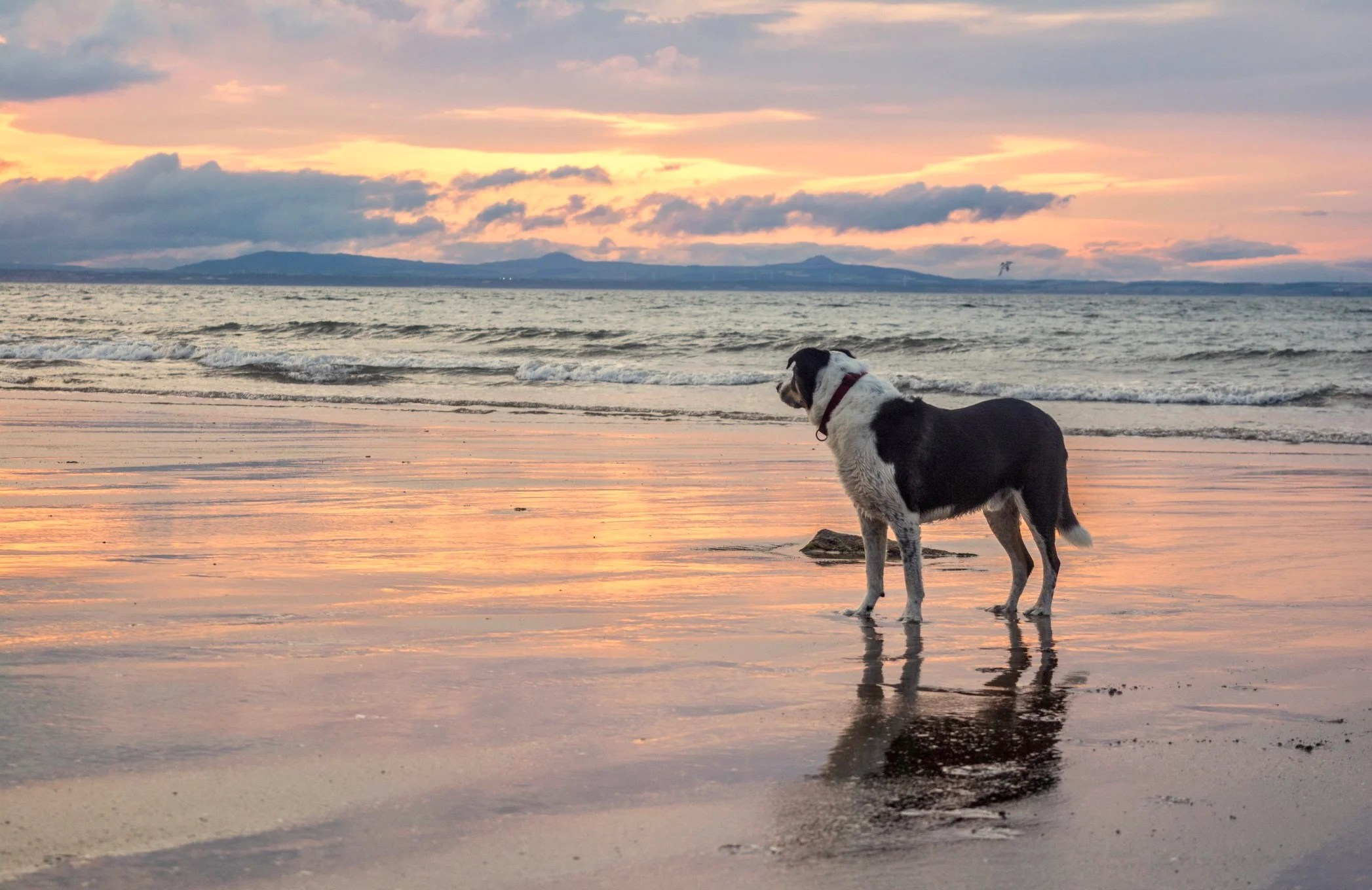 The Best Dog Friendly Beaches In America