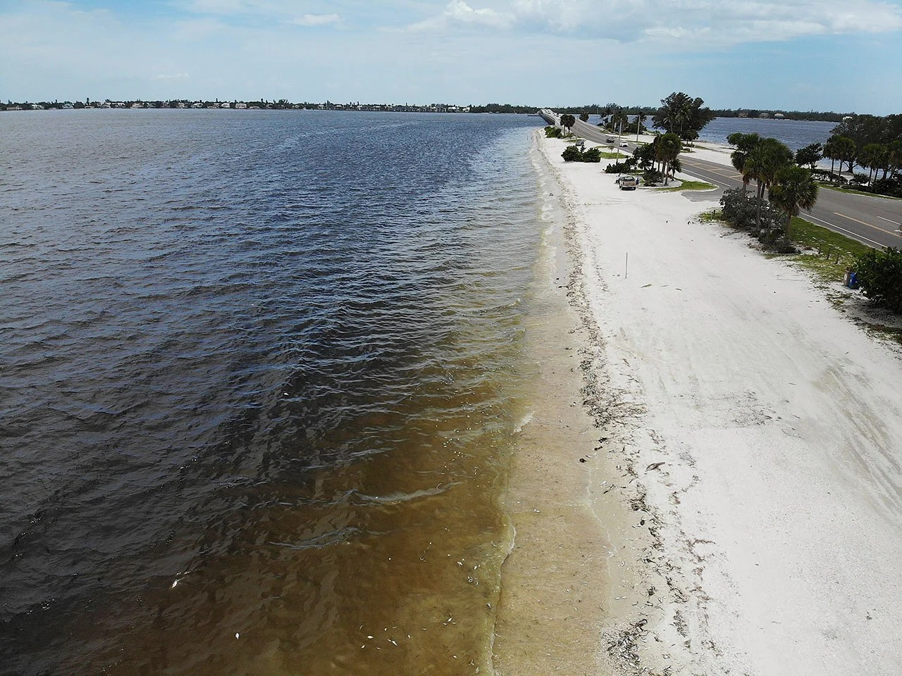 Dead fish line the shoreline along the Sanibel causeway. (Photo by Joe Raedle/Getty Images)