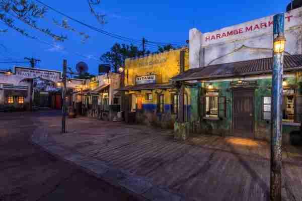 Harambe at Animal Kingdom (photo by Disney)