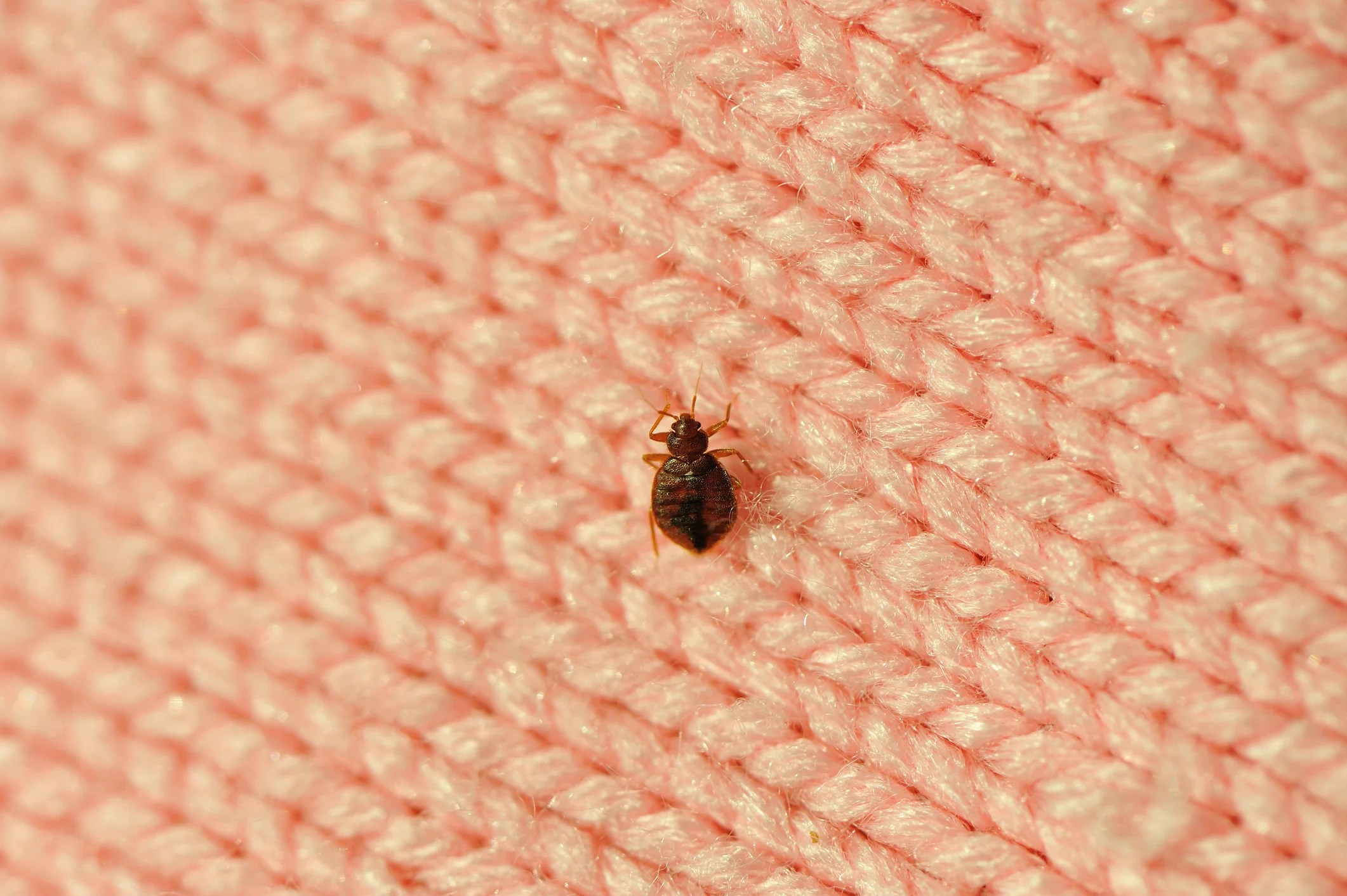These Cities Had the Most Bed Bug Infestations in 2018