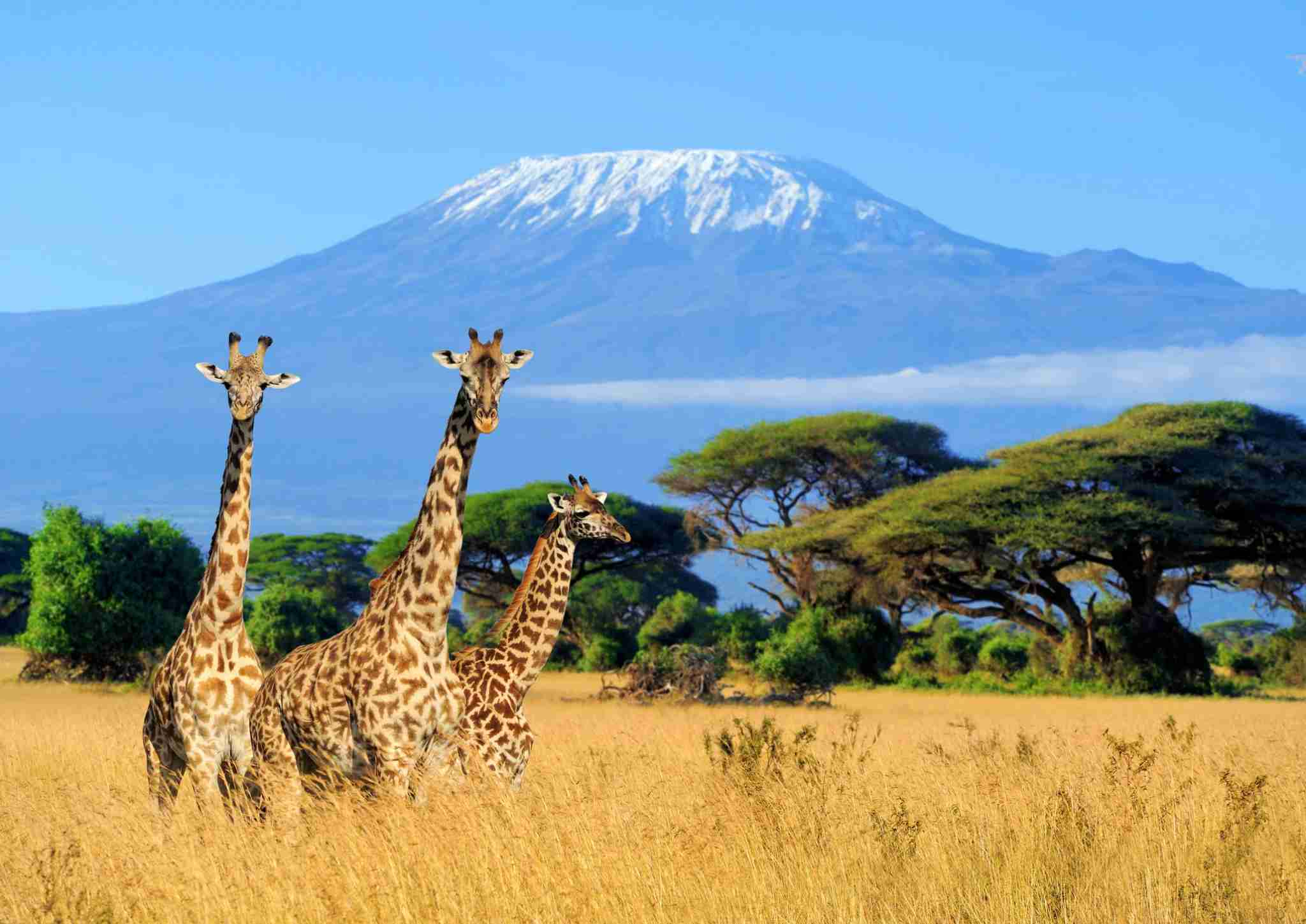 Use your points and miles to take the ultimate trip to Mt. Kilimanjaro. (Photo by Byrdyak / Getty Images)