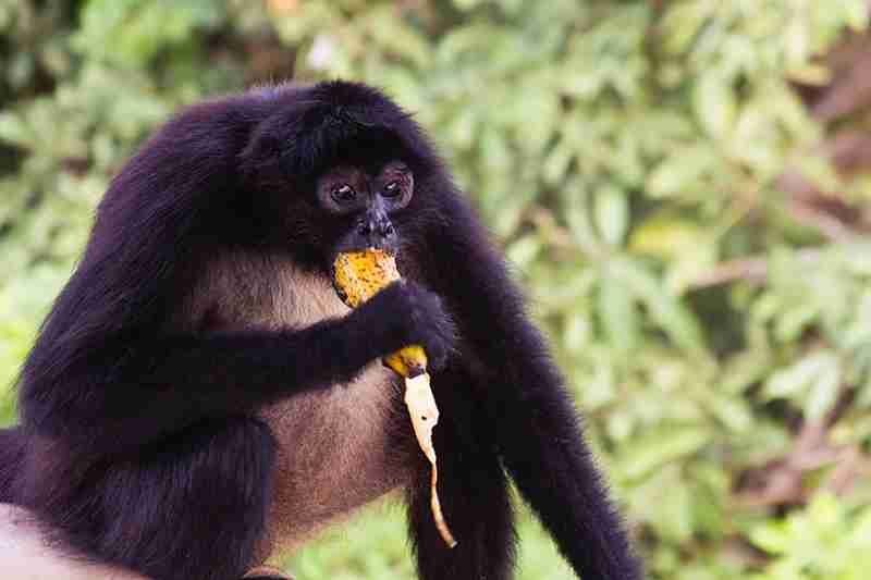 Delivering meals to Monkey Island will be a highlight of any stay at Las Lagunas Boutique Hotel in Guatemala. (Photo: Diamond Public Relations)
