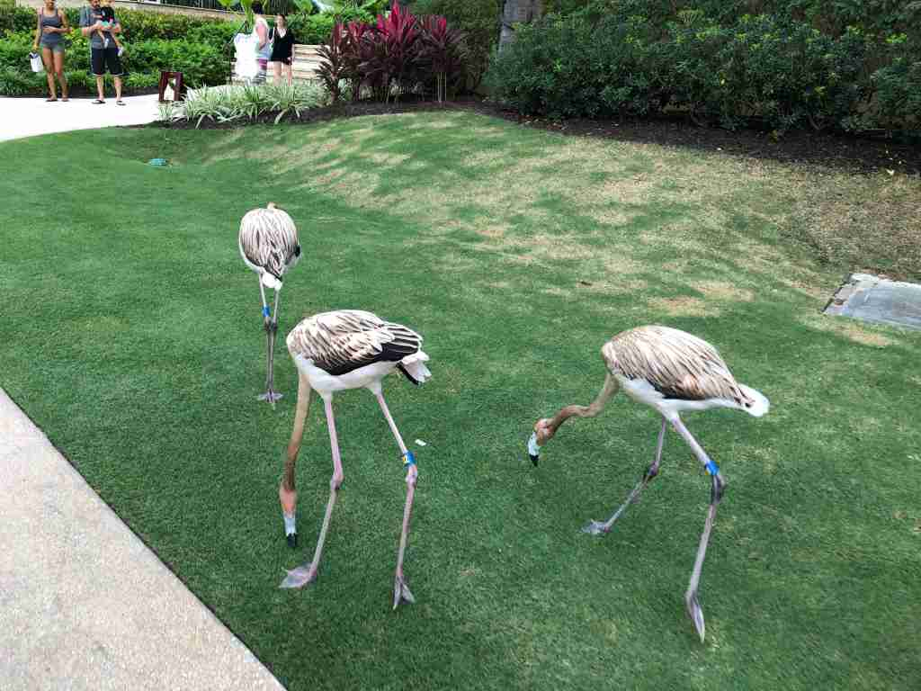 Go on a daily walk with the baby flamingos (Photo via Jennifer Yellin / Deals We Like)