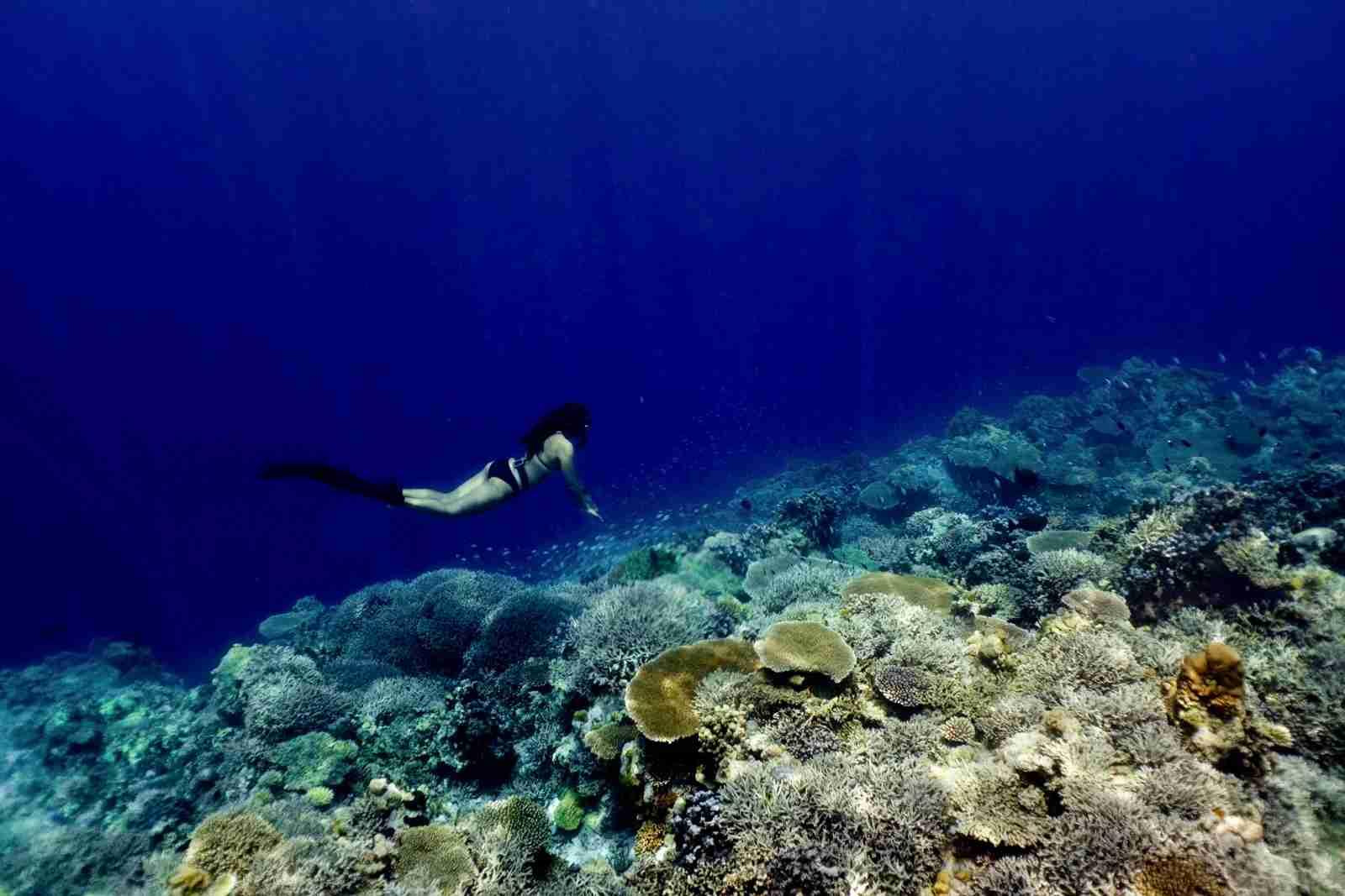 The Apo Reef in Sablayan. (Photo by Farhan Sharief via Unsplash)
