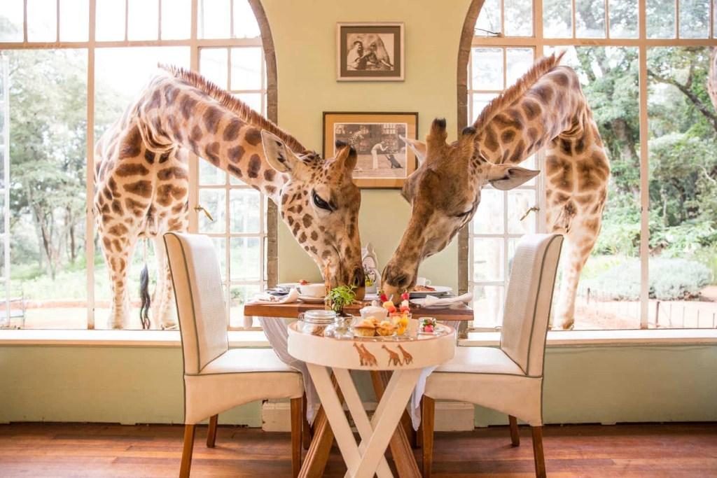 (Photo courtesy of The Safari Collection)