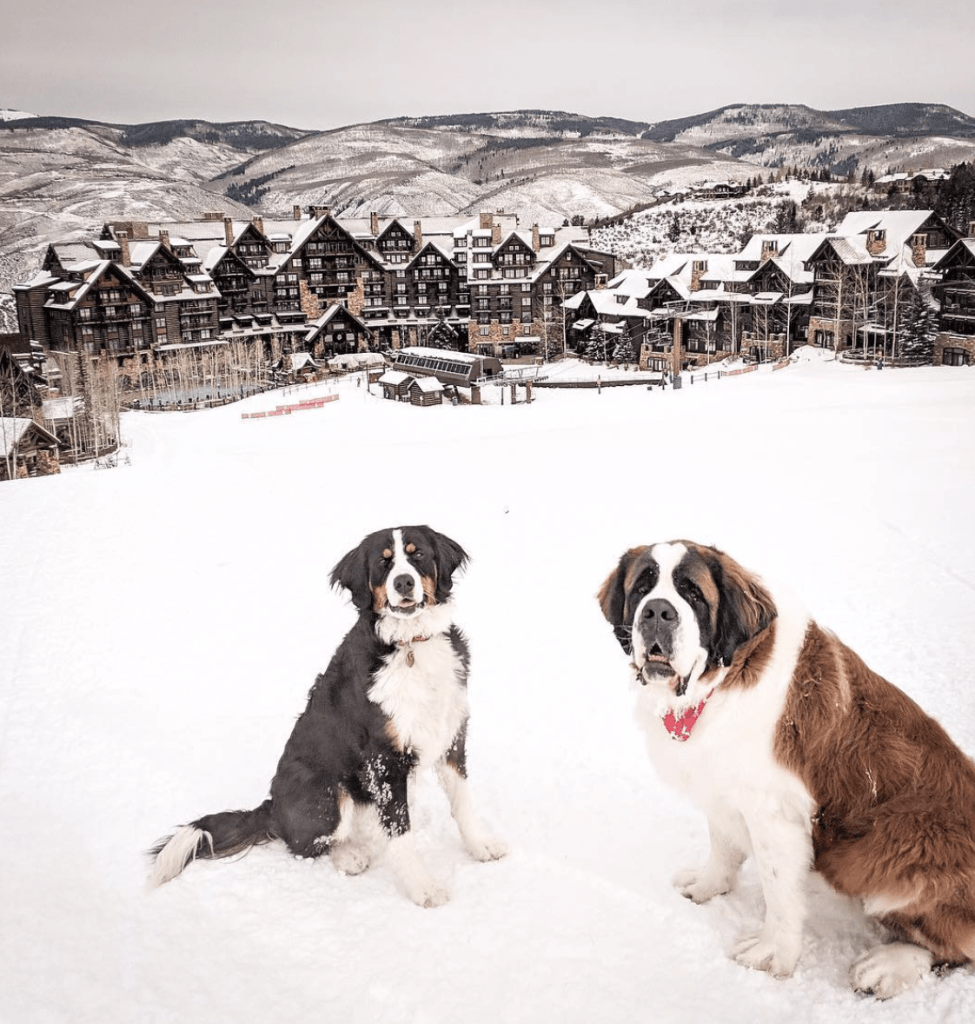 Ritz-Carlton Bachelor Gulch's Scout and Bachelor. (Instagram)