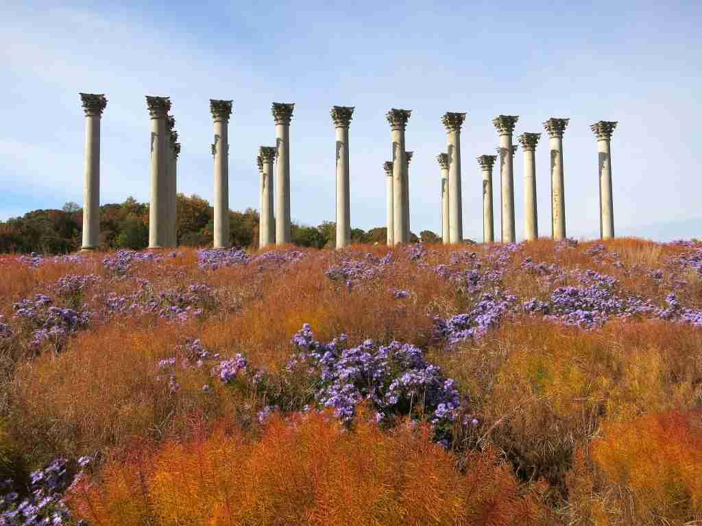 Naitonal Capitol Columns National Arboretum