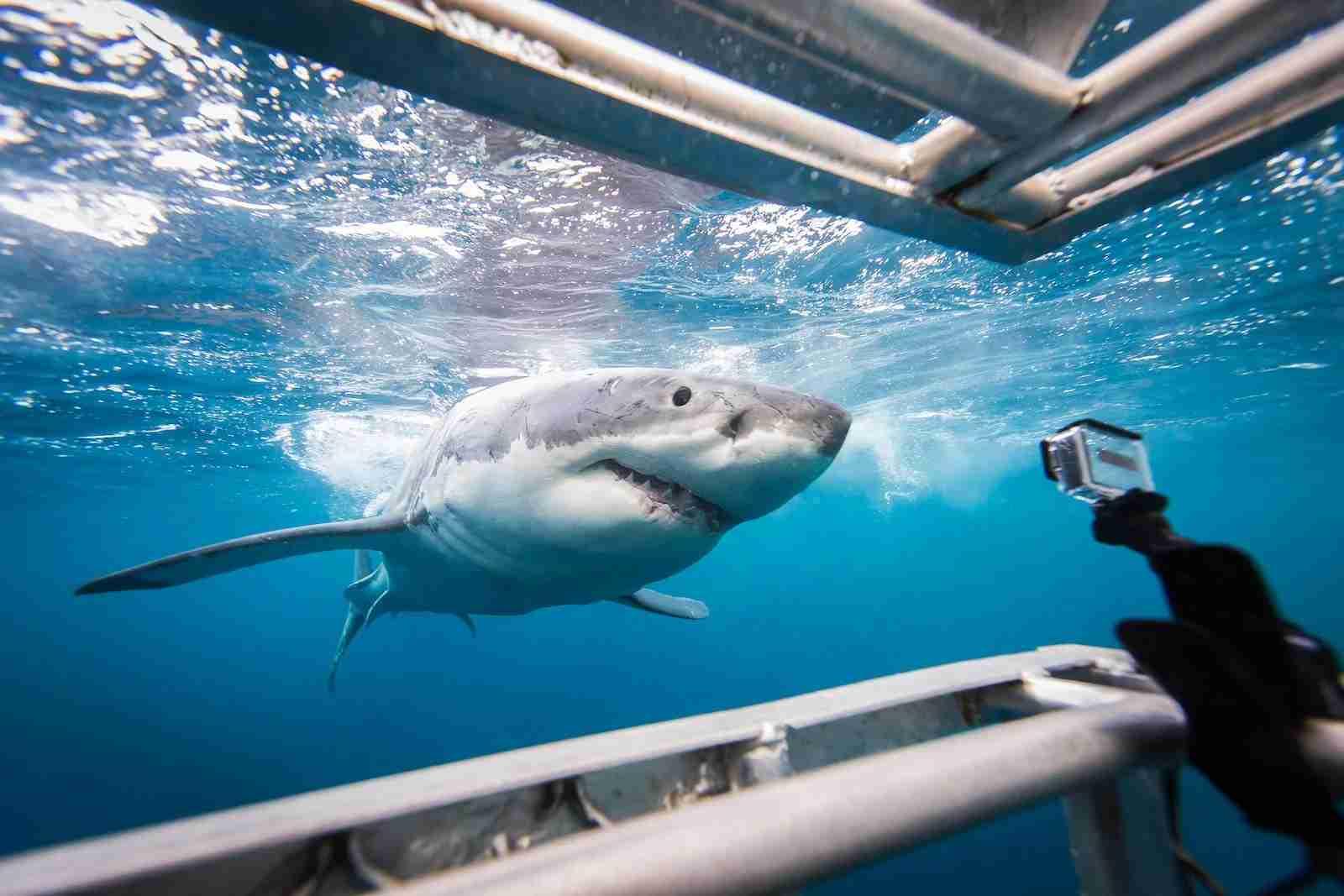 (Photo credit Brad Leue / Barcroft Images / Barcroft Media via Getty Images)