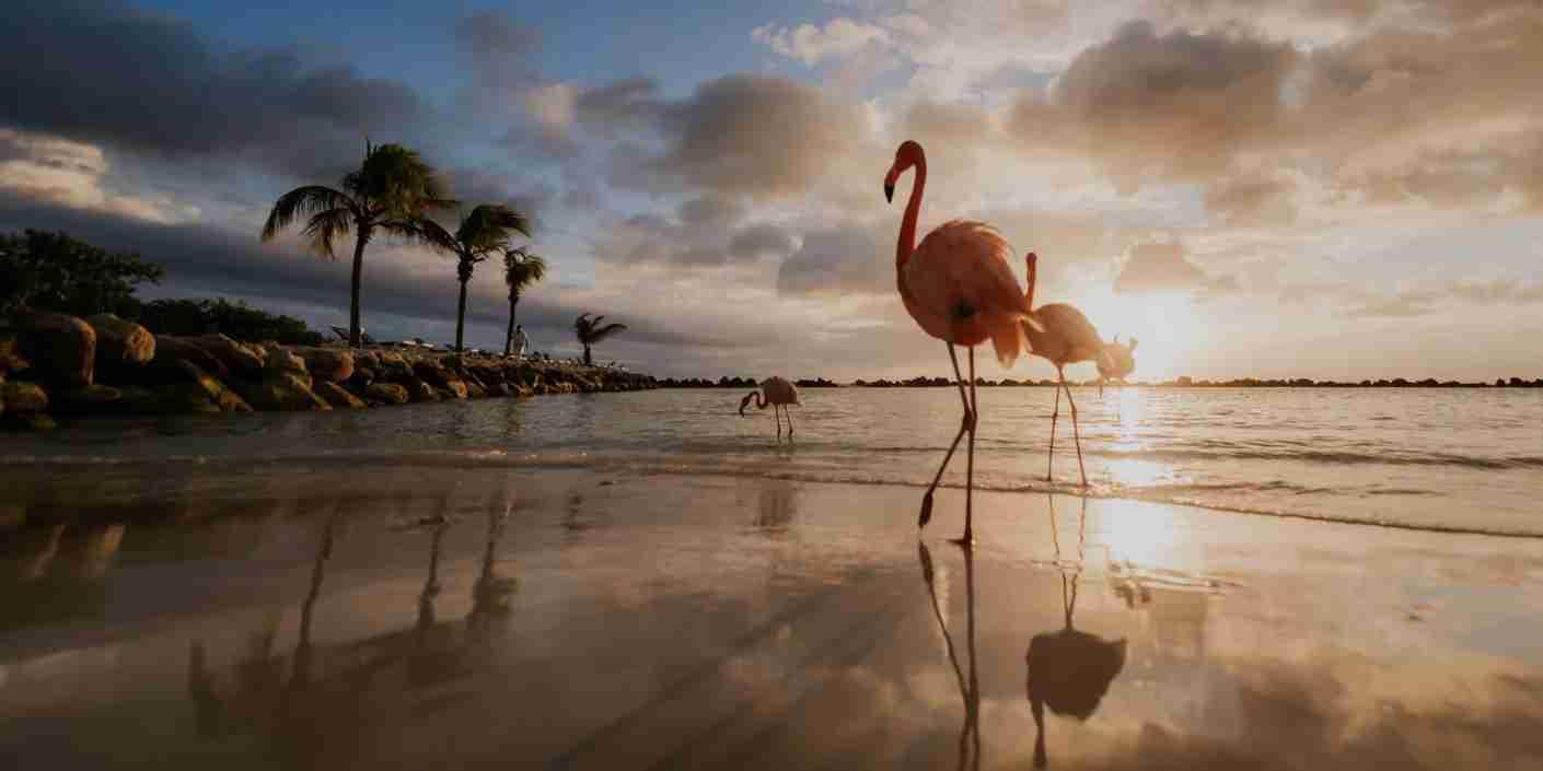 (Photo courtesy of Renaissance Aruba)