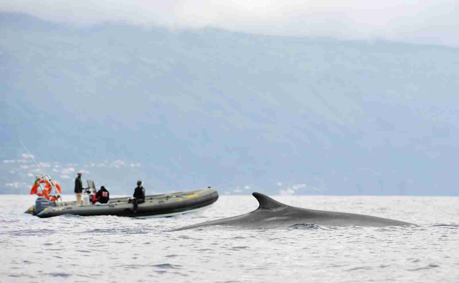 Whale-watching in the Azores. (Photo via Getty Images)