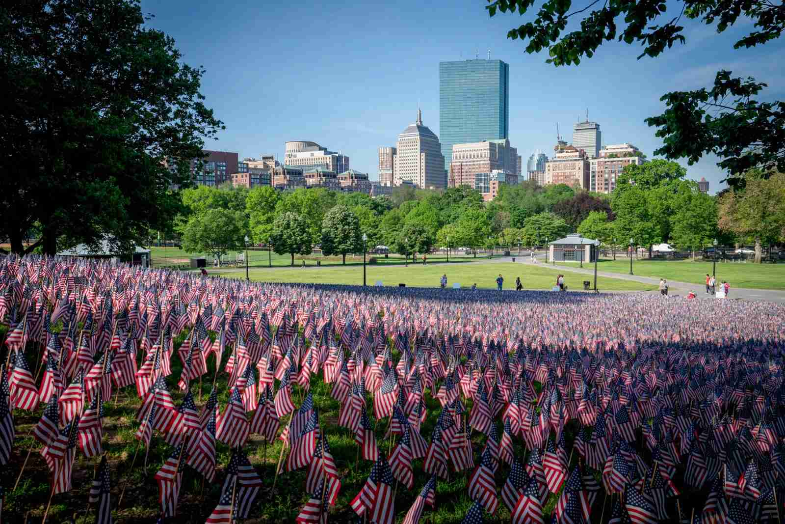 American flags in the Boston Common in spring. (Photo by Michael Skok/Unsplash)