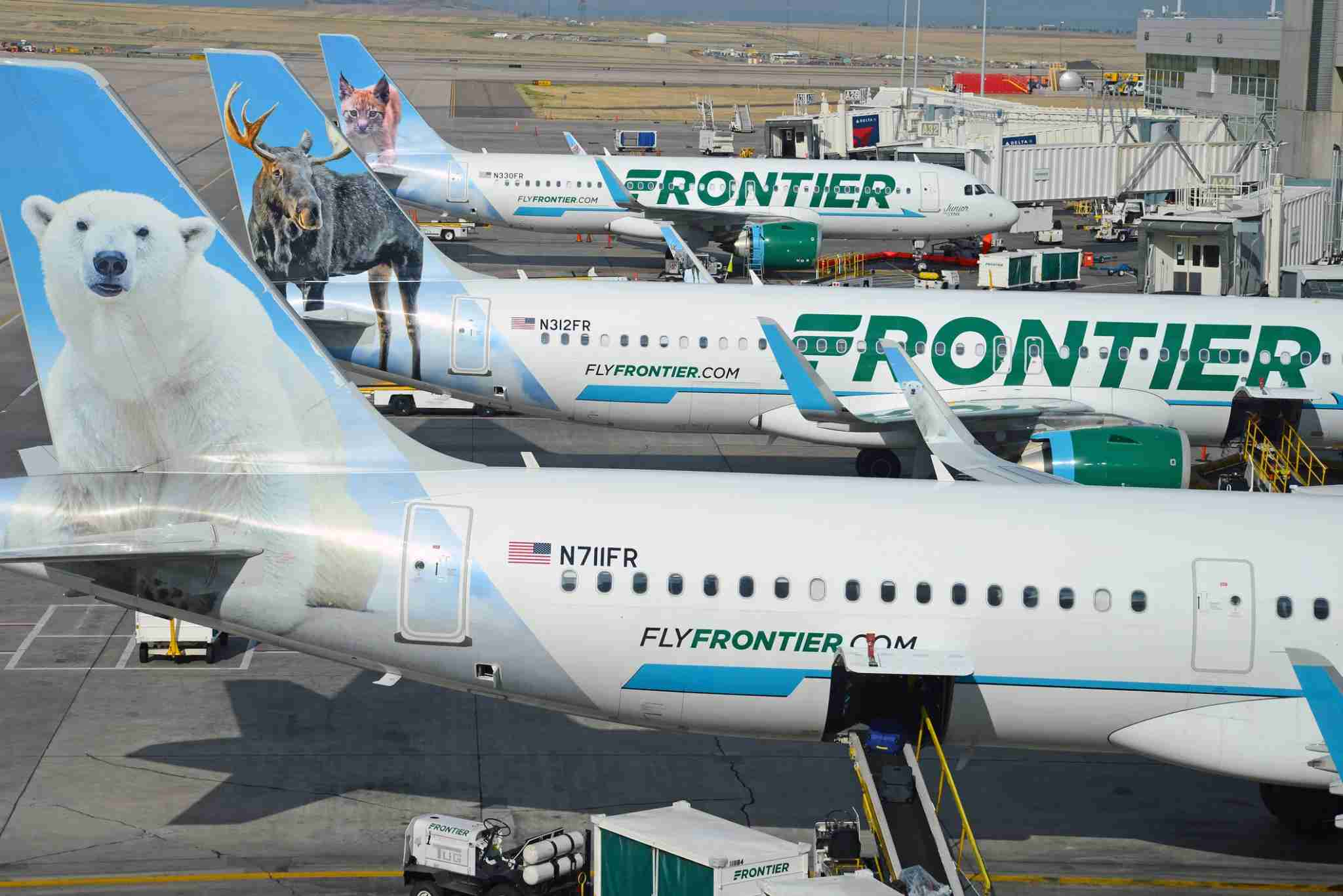 Frontier Airlines planes are seen lined up at their gates/ (Photo by robertcicchetti / Getty Images)