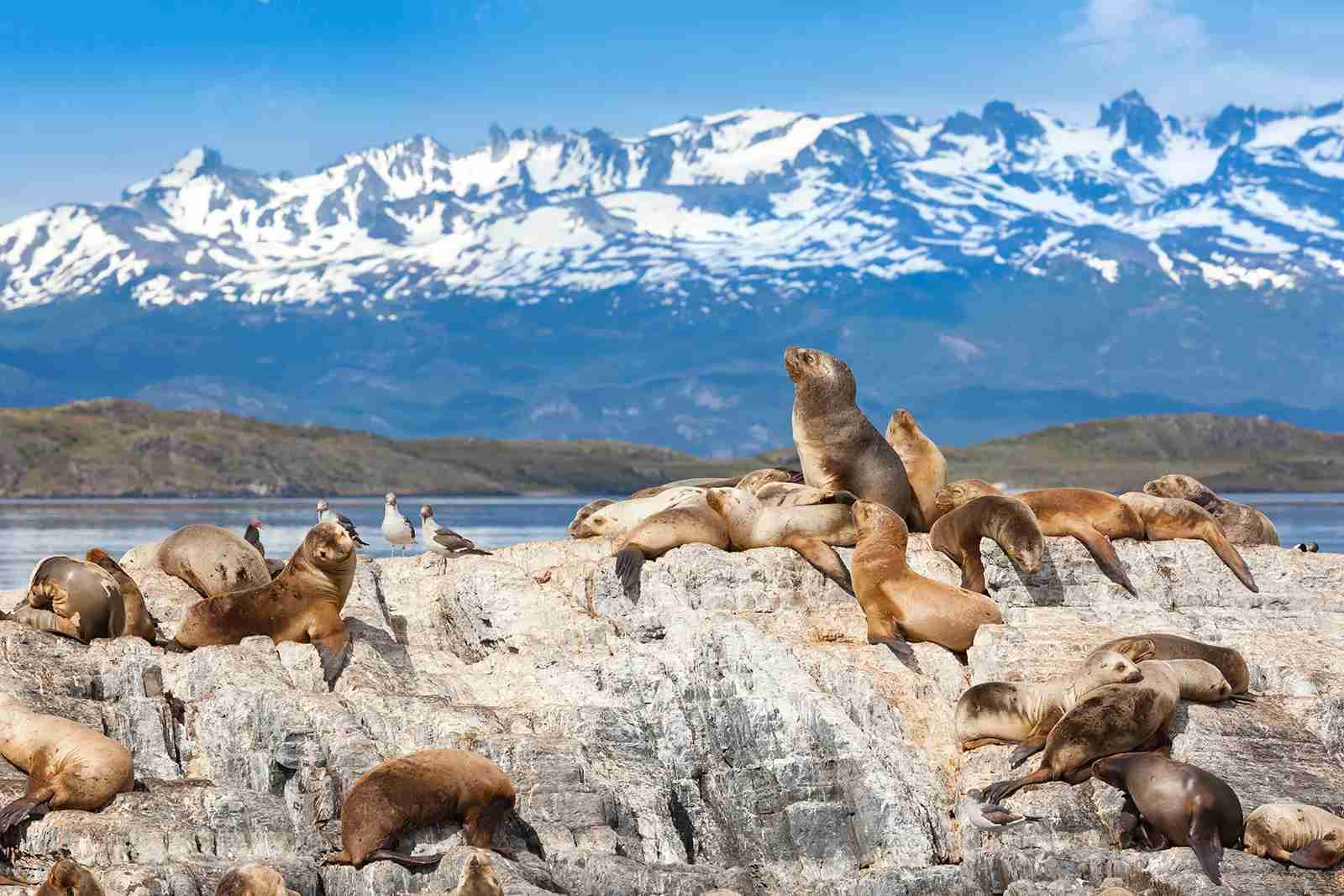 Sea lions are a part of the wildlife seen in Argentina. (Photo by Grafissimo/Getty Images)