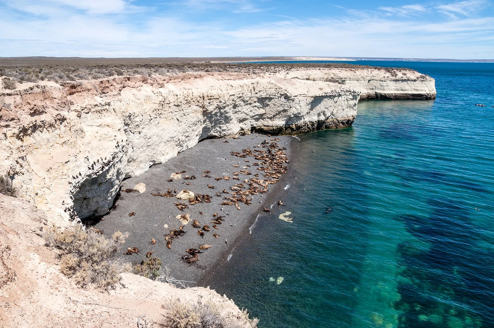 A colony of sea lions on a beach south of Puerto Madryn, Argentina.