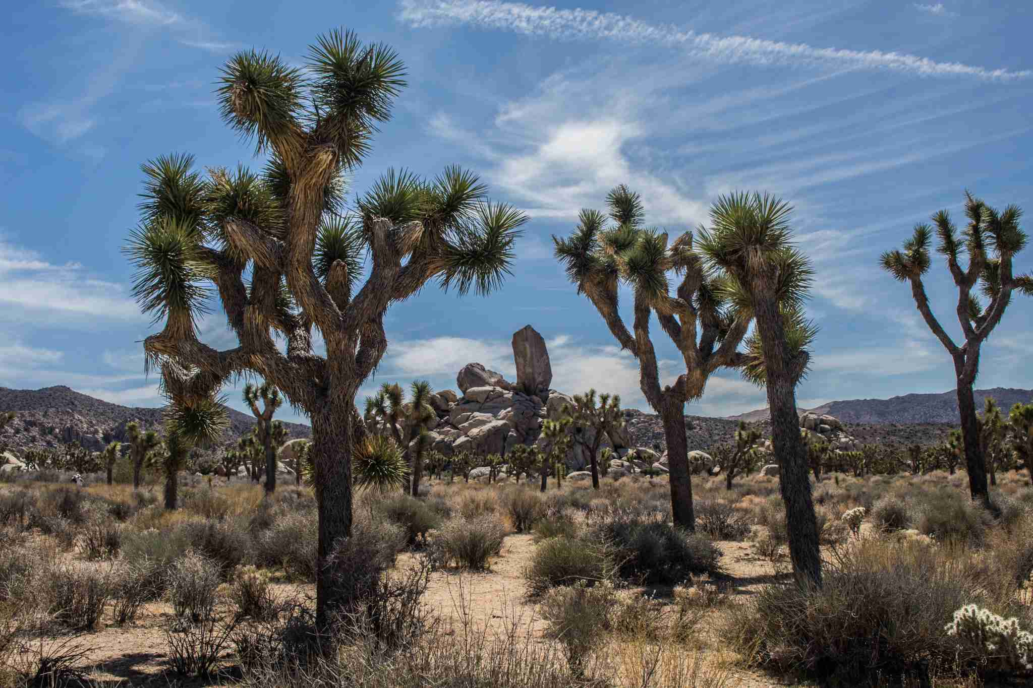 Joshua Tree National Park. Photo by Owen Rupp on Unsplash.