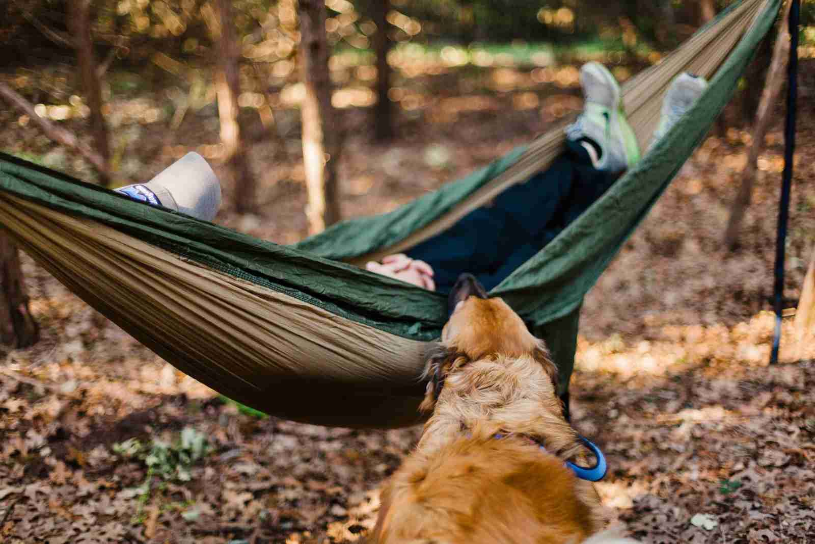 Man in hammock with dog in the woods