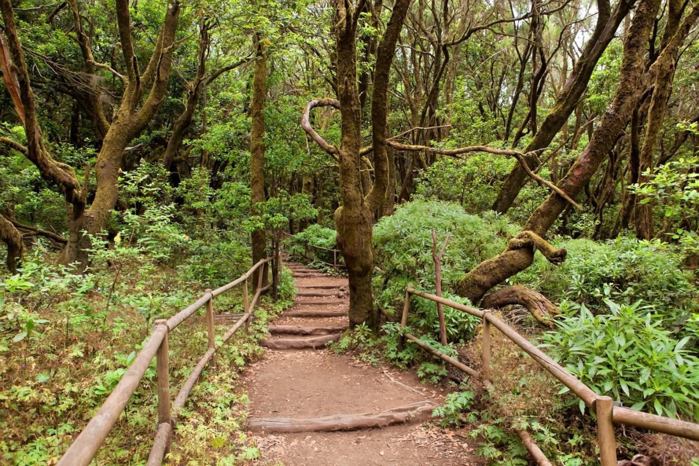 The rainforest in La Gomera, Parque Nacional de Garajonay, Canary islands, Spain. (Photo by nodff / Shutterstock)