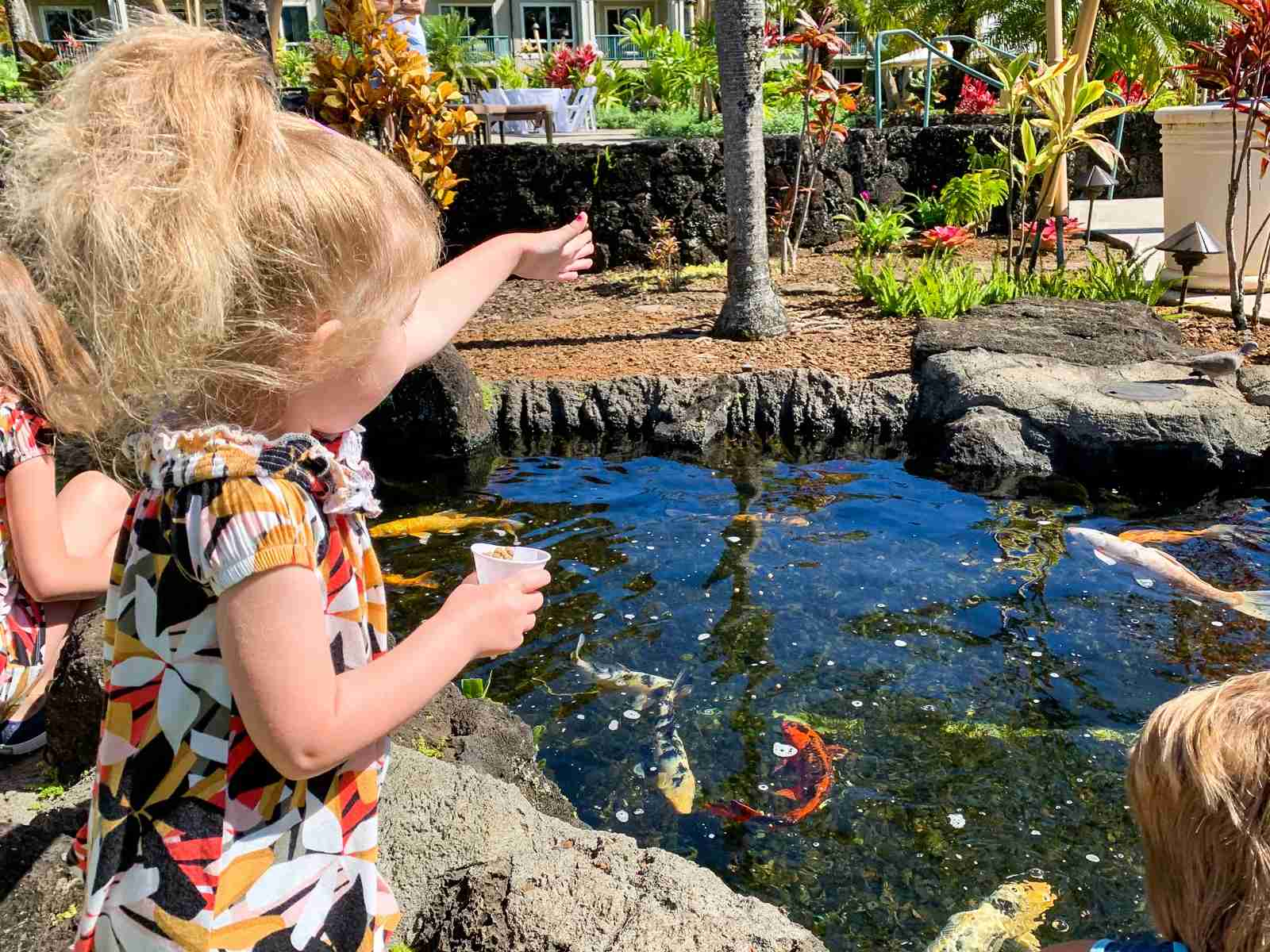 Feeding fish at the Westin Princeville (Photo by Summer Hull / The Points Guy)