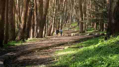 Hike Presidio San Francisco California