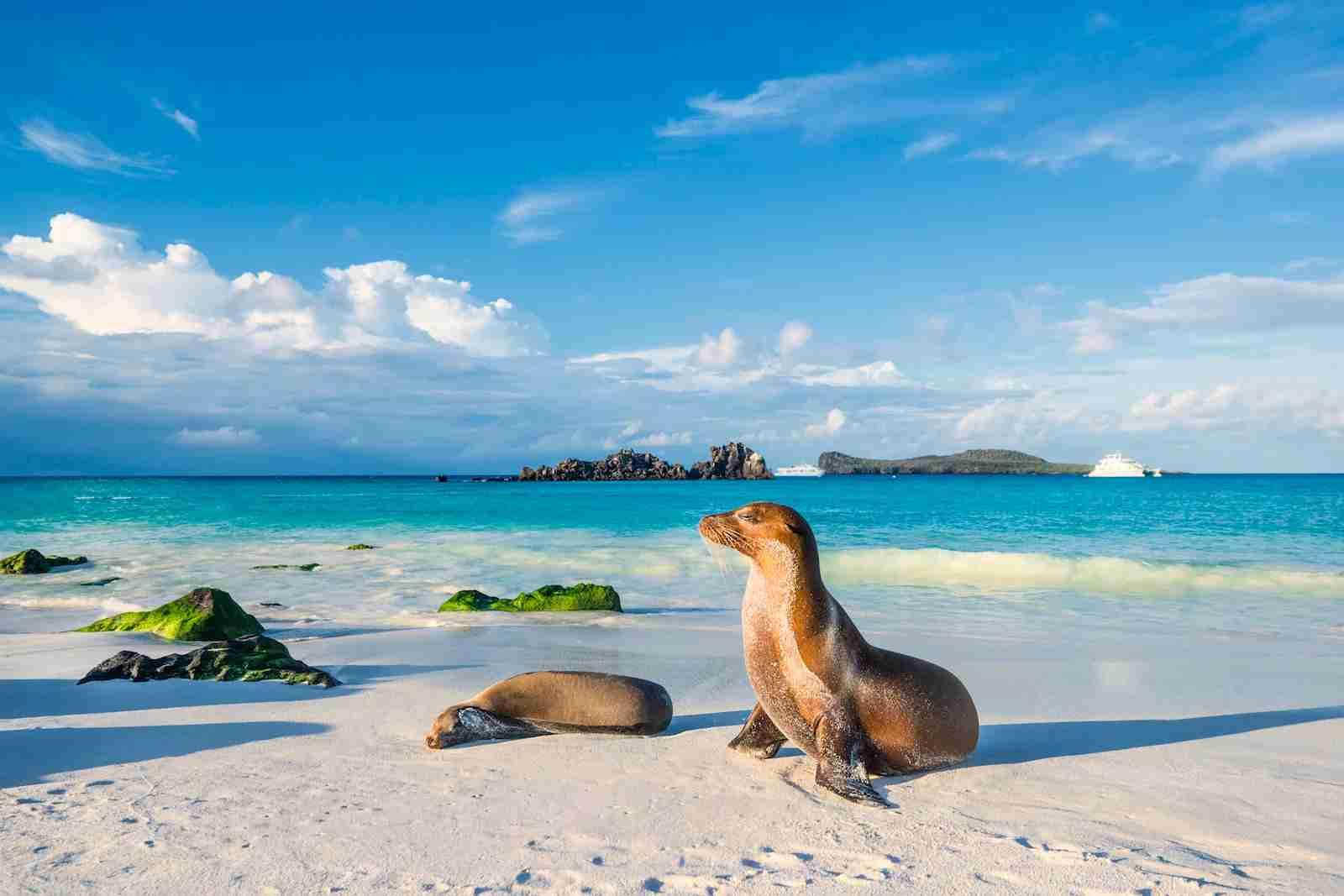Les îles Galapagos (photo de guenterguni / Getty Images)