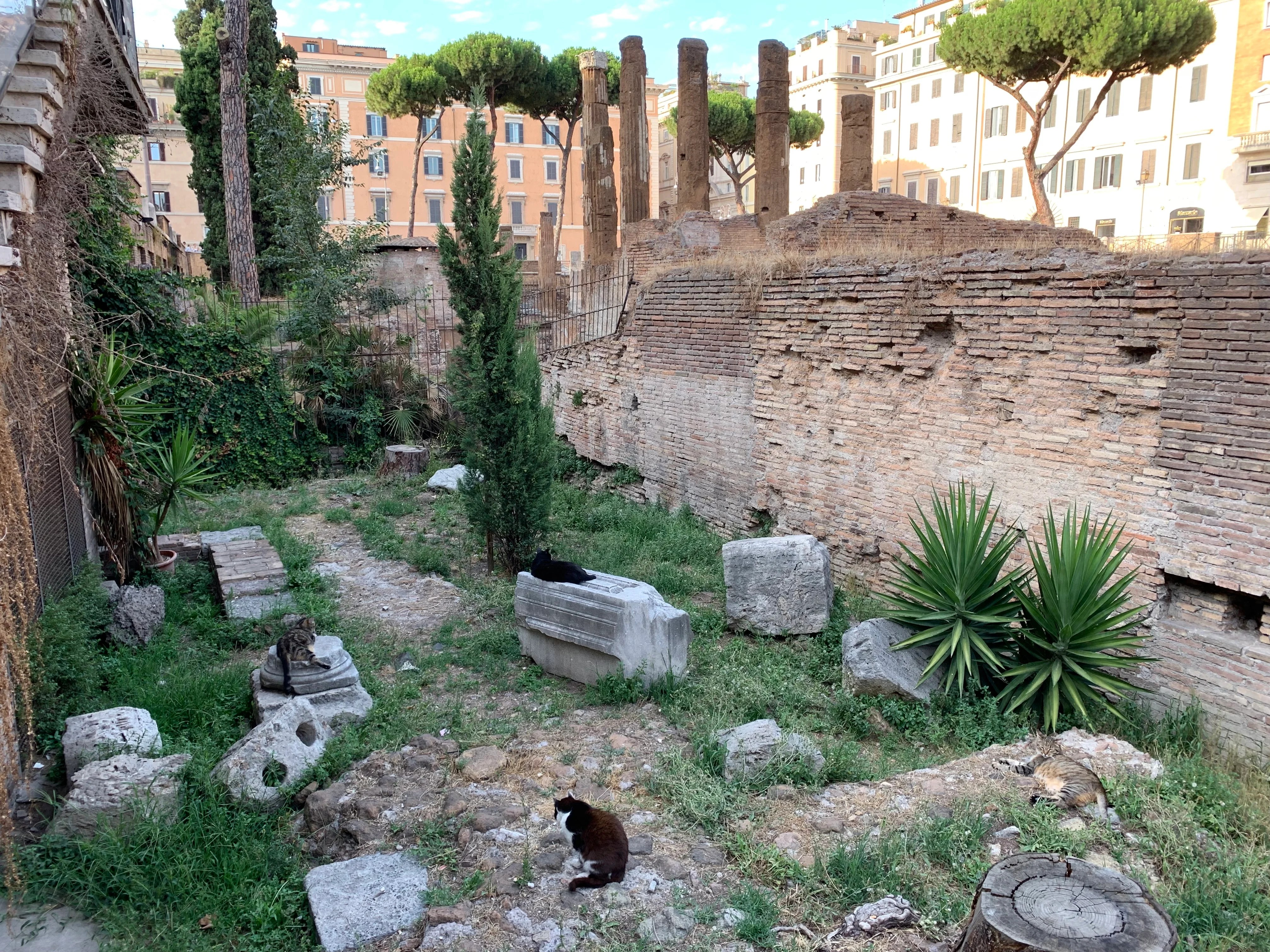 Why You Need to Add This Cat Sanctuary in an Archeological Site to Your Bucket List