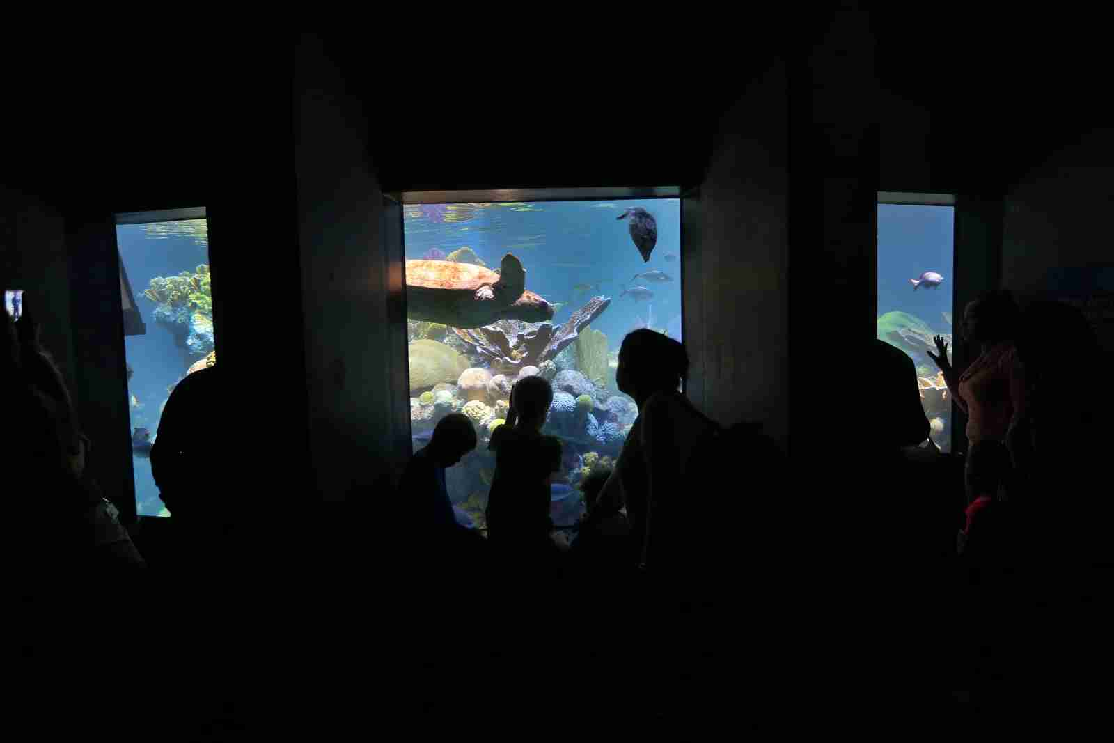 The Giant Ocean Tank at the New England Aquarium. (Photo by David L. Ryan / The Boston Globe / Getty Images)