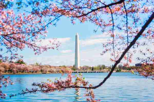 The Washington Monument in Spring. (Photo by JGI / Daniel Grill / Getty Images)