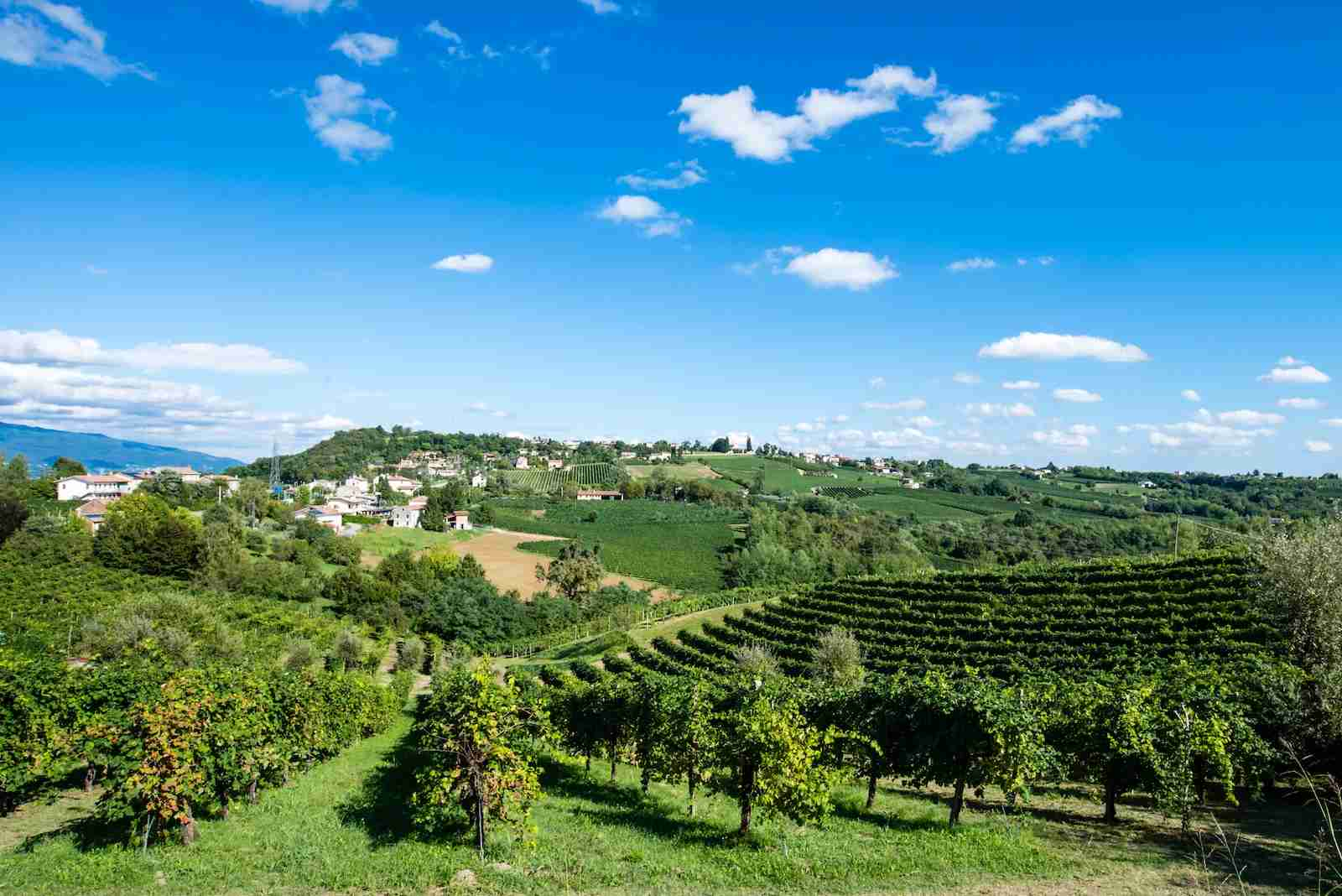 The Prosecco Road. (Photo by mTre/Shutterstock)