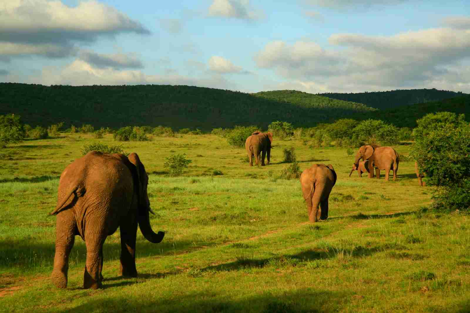 Addo Elephant National Park in Eastern Cape, South Africa. (Photo by Jeremy Jowell/Majority World/Universal Images Group/Getty Images)