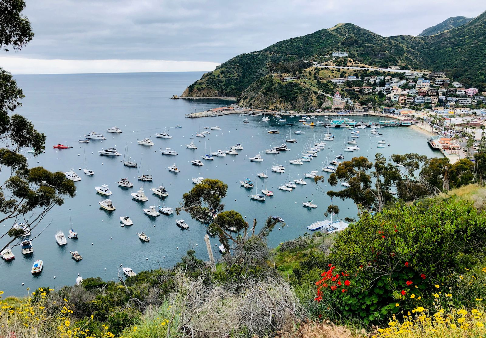 Avalon harbor from the Catalina Island ridge top. (Photo by DANIEL SLIM/AFP/Getty Images)