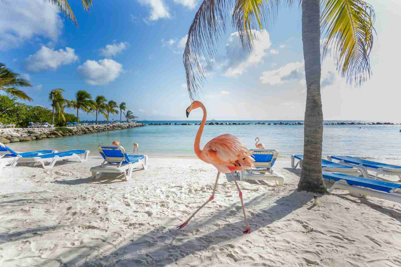 Flamingo Beach, Aruba. (Photo by MasterPhoto/Shutterstock)
