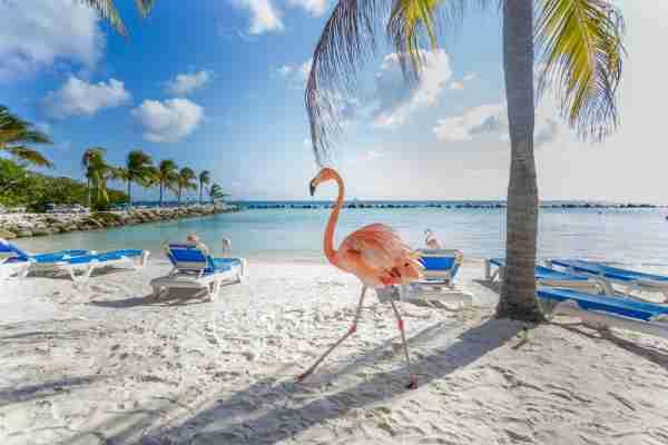 Flamingo Beach, Aruba.  (Photo from MasterPhoto / Shutterstock)