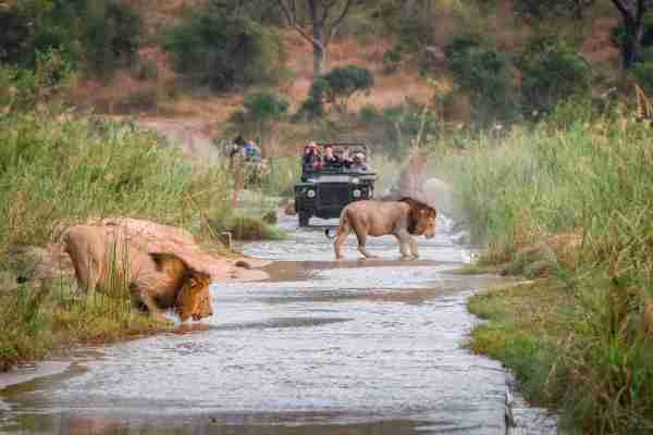 Out on an African game drive. (Photo by Londolozi Images/Mint Images/Getty Images)