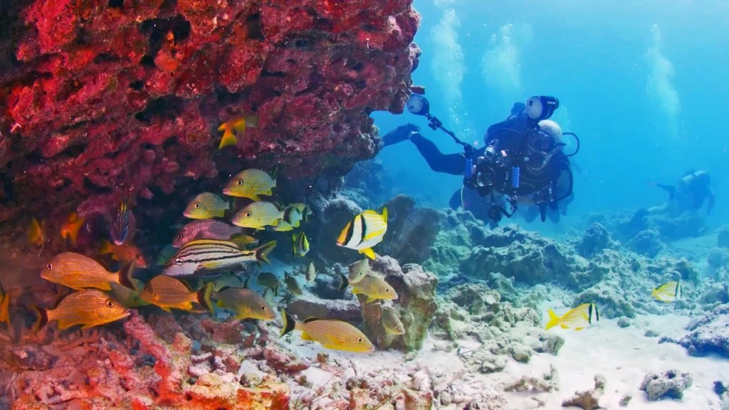 62e654511f5 Easy Florida Dive and Snorkeling Trips for Kids