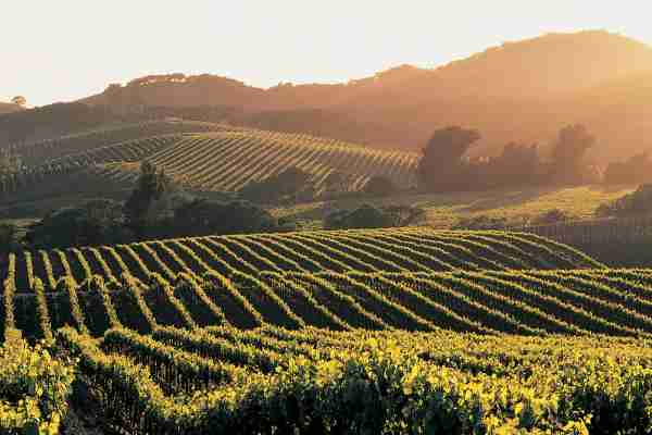 Napa Valley. (Photo by Andrew Gunners/Getty Images)