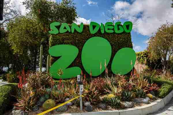 San Diego Zoo April 2020. (Photo by Daniel Knighton/Getty Images)