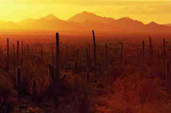 Saguaro National Park. (Photo by Danny Lehman/Getty Images)