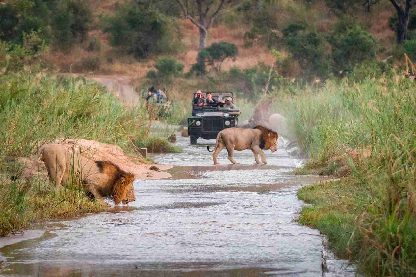 (Photo by Londolozi Images/Mint Images/Getty Images)